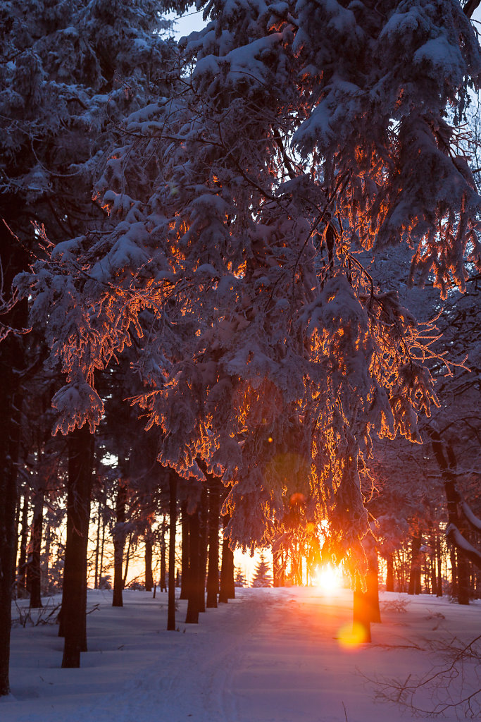 Winter am Inselsberg